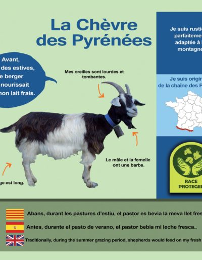 Chèvre Pyrénées