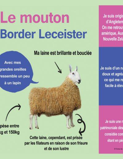 Mouton Border Leceister