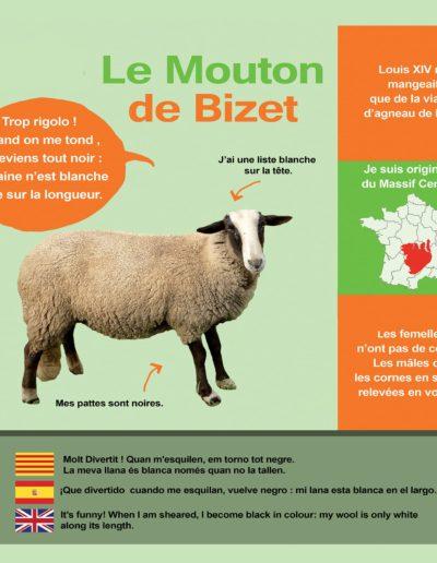 Mouton du Bizet