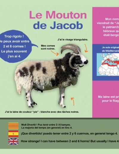 Mouton de Jacob