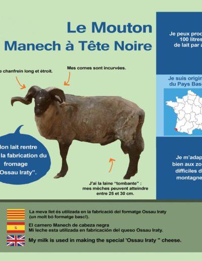 Mouton Manech