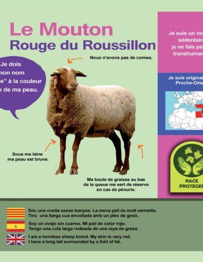 Mouton rouge Roussillon