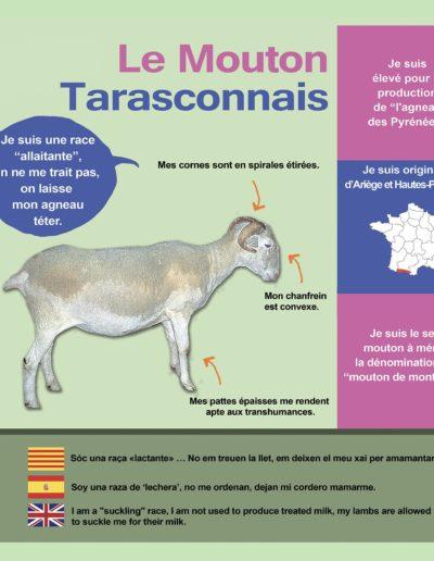 Mouton Tarasconnais