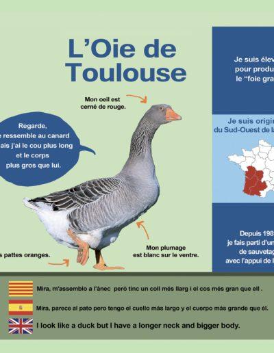 Oie de Toulouse